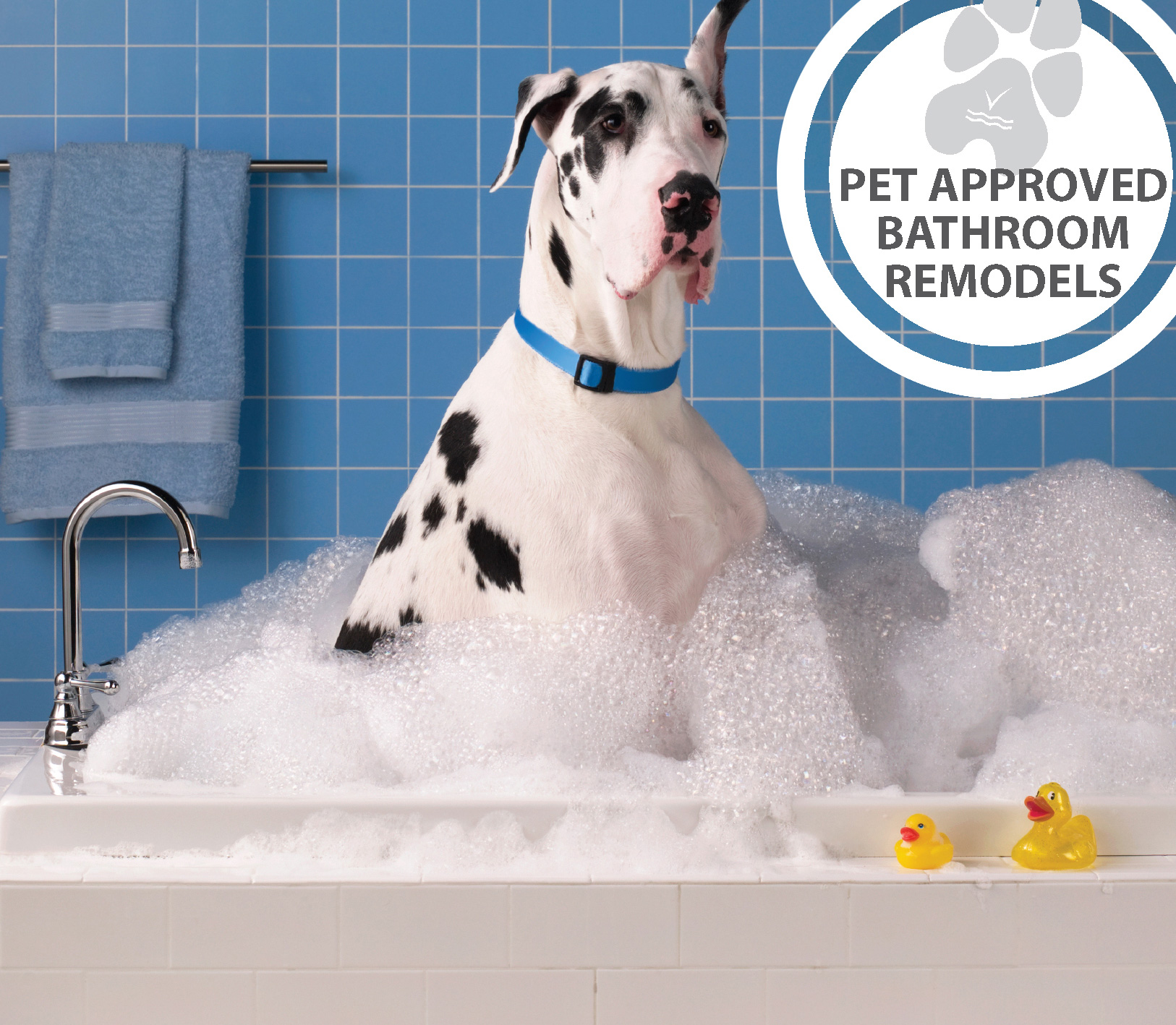 Pet Approved Remodeling